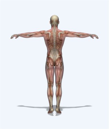 Human anatomy for medico legal reports