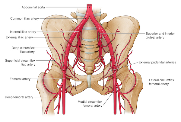 Fractures of the pelvis for medico legal information