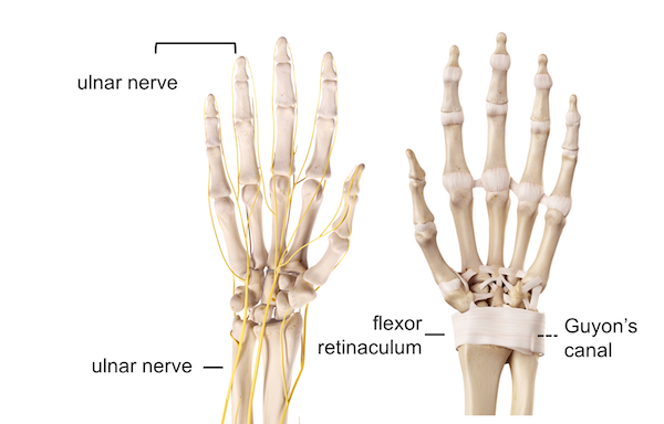 Image of the ulnar nerve and the Guyon's canal seen from the palmar side the hand